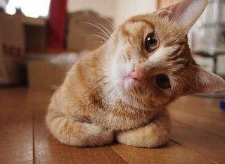 Imagine atasata: 10-pisici-haioase02.jpg