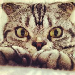 Imagine atasata: Fotografii-Instagram-pisica-Shishi08.jpg