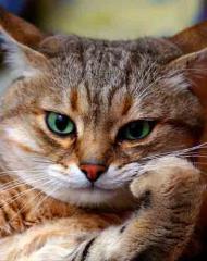 Imagine atasata: pisica-ganditoare.jpg